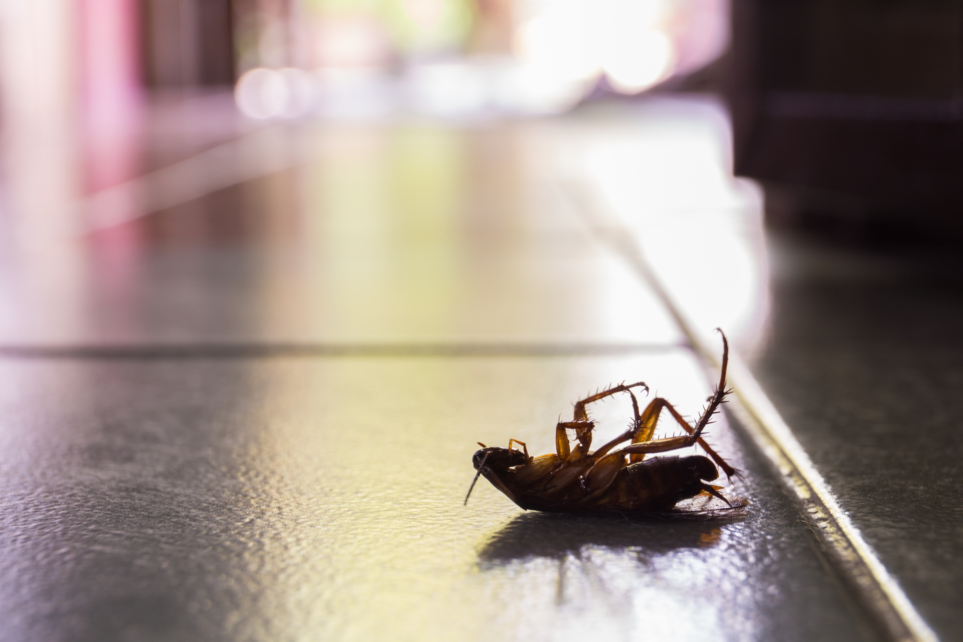 Cockroach Control, Pest Control in Clayhall, IG5. Call Now 020 8166 9746