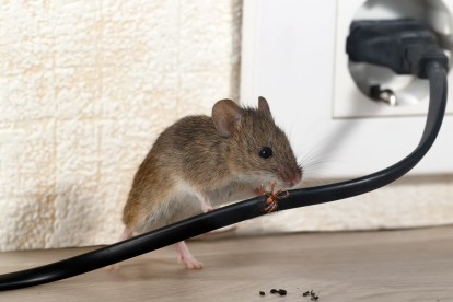 Pest Control in Clayhall, IG5. Call Now! 020 8166 9746