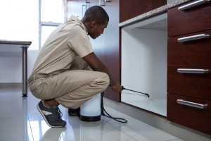 Pest Inspection, Pest Control in Clayhall, IG5. Call Now 020 8166 9746