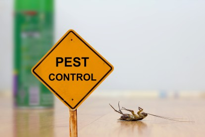 Pest Contol in Clayhall, IG5. Call Now 020 8166 9746
